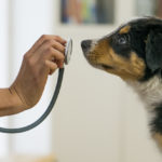 A veterinarian is taking care of a puppy | Pet Care Centers near Lone Tree